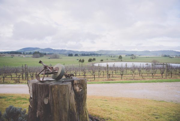 Country Victorian Wedding Photography